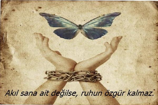 özgür6a