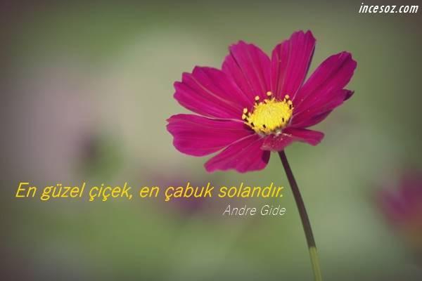 Çiçekler ile İlgili Sözler