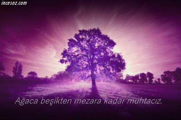 ağaç3