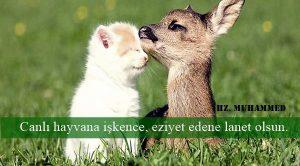 Hayvanlar ile İlgili Sözler