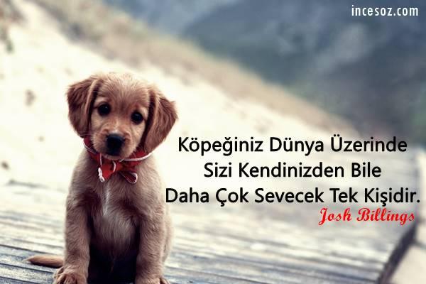Köpek ile İlgili Sözler